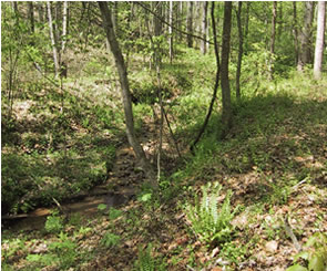 stream on mountain lot
